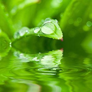 Hojas verdísimas y agua que inducen a la relajación al ver el conjunto