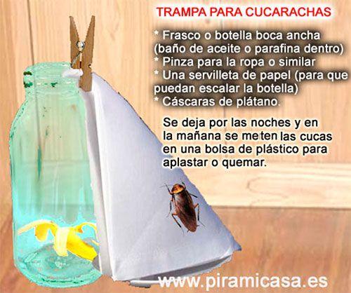 Piramicasa cosas gratis trampa casera para cucarachas - Remedios para eliminar cucarachas ...