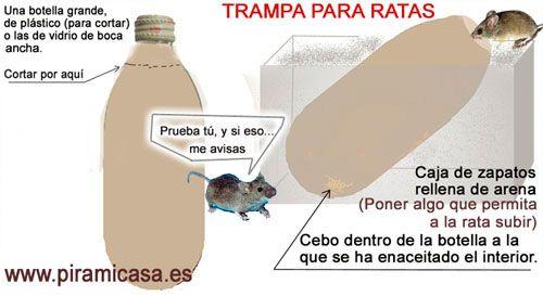 TRAMPA PARA RATAS CASERA Y EFECTIVA - Cosas Gratis - Piramicasa